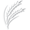 espiga-branca